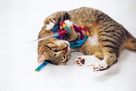 Cat Dancer  Cat Charmer Interactive Cat Toy