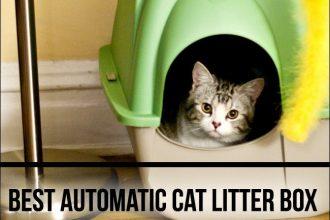 best automatic cat litter box