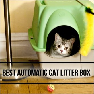 Automatic Litter Box For Multiple Cats Amazon