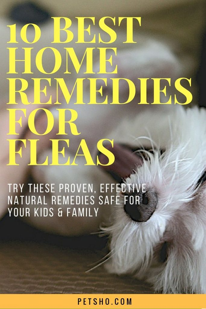 10 best home remedies for fleas