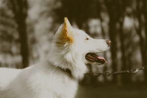 Best Dog Training Collar + Shock Collar Reviews