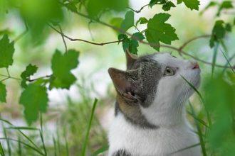 spider plant cats poisonous