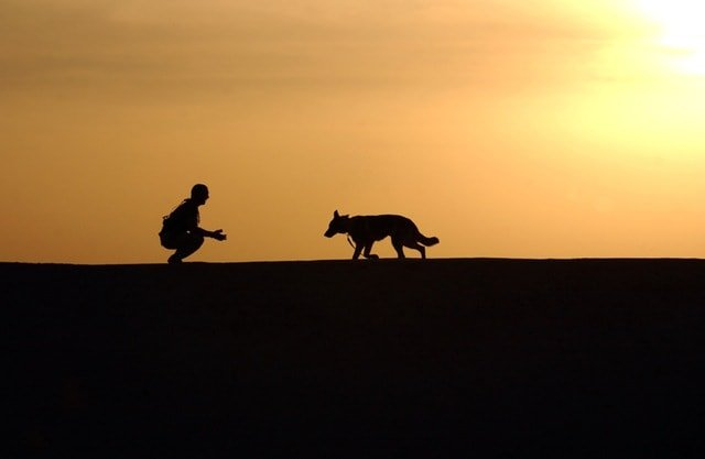 pets-love-insurance