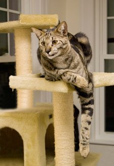 Go Pet Club Cat Tree with Beige Color-review