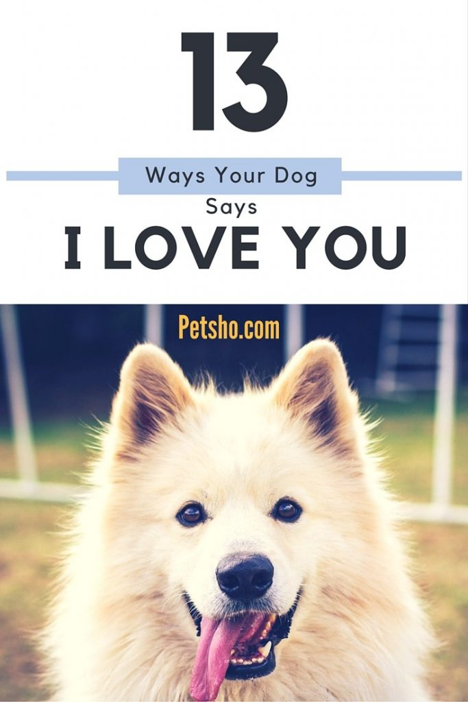 13 Ways your dog says i love you