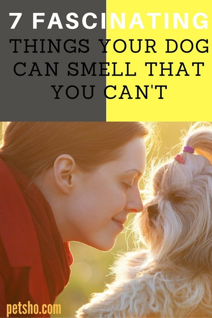 7 things your dog can smell that you cant