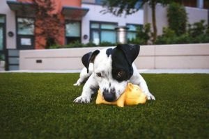 top dry dog foods